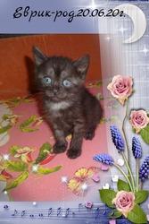 необычный котик черный дым от као мани и рагамаффина